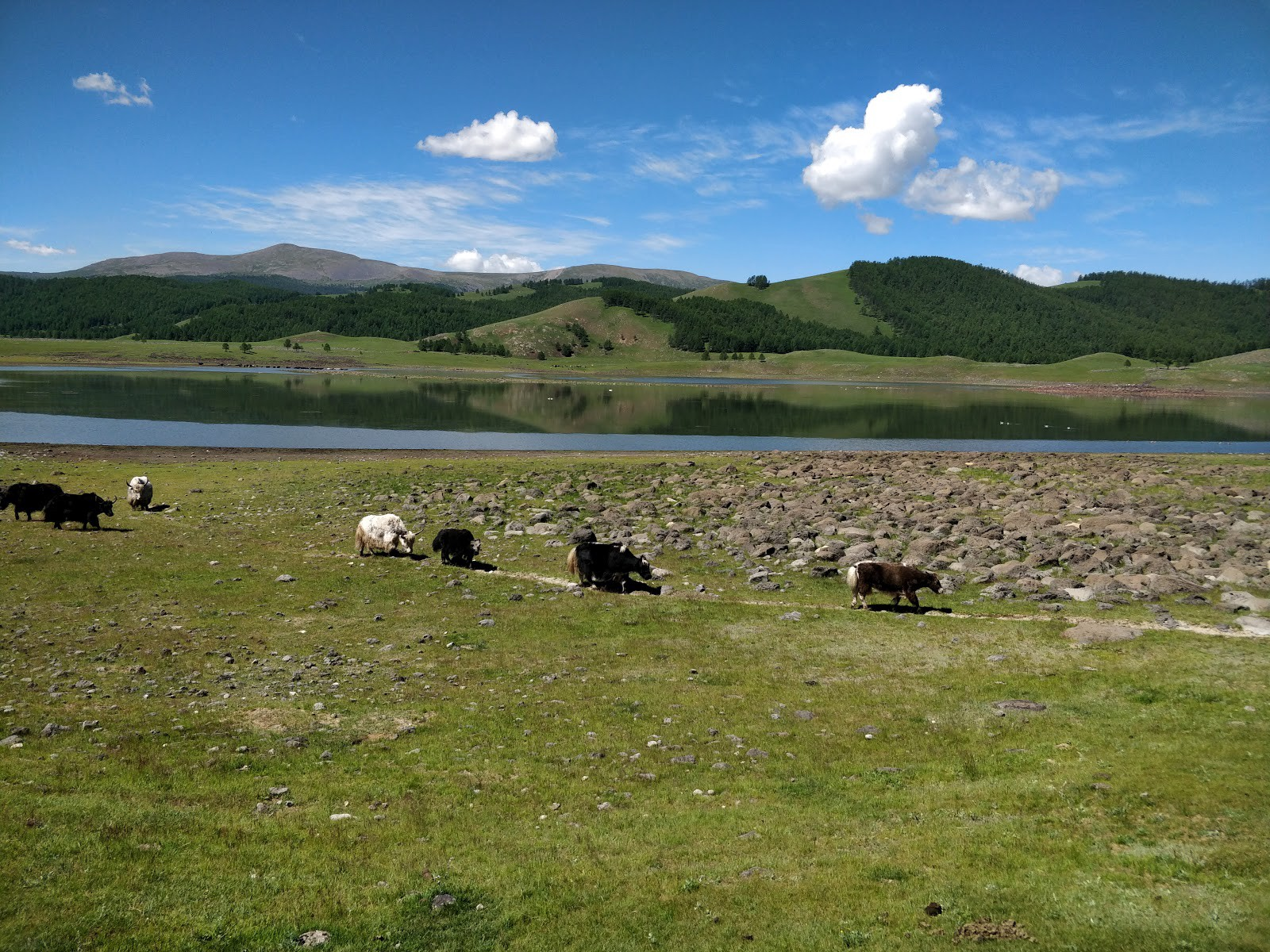 Mongolie paysage